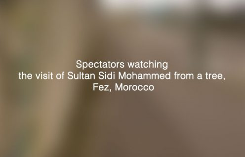 Spectators watching the visit of Sultan Sidi Mohammed from a tree, Fez, Morocco